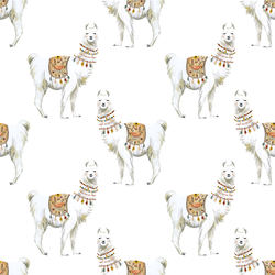 Llamas in White