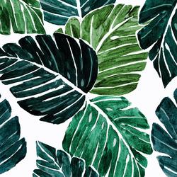 Monstera Leaves in Tropical