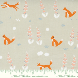 Foxes in Cloud