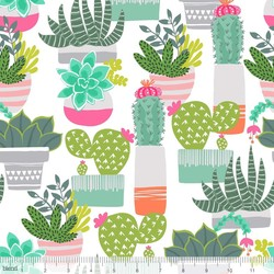 Spiny Succulents in White