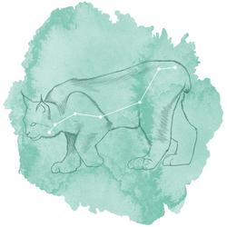 Lynx Panel in Succulent