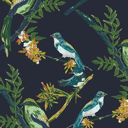 Songbird in Night Talks