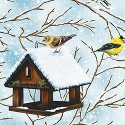 Birds of a Feather in Winter