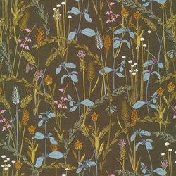 Little Grasses in Acacia