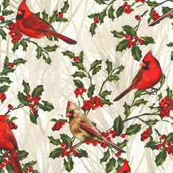 Holly in Cardinal