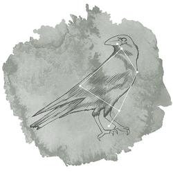Corvus Panel in Sage