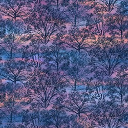Trees in Dawn