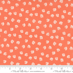 Lucky Shell in Coral