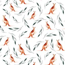 Kangaroos in White