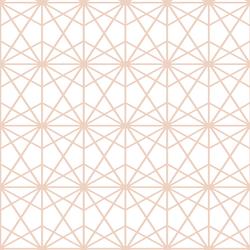 Terrarium in Shell on White