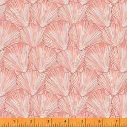 Shells in Coral