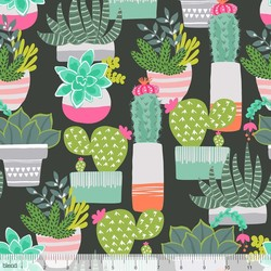 Spiny Succulents in Black