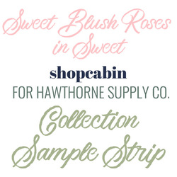 Sweet Blush Roses in Sweet Sample Strip