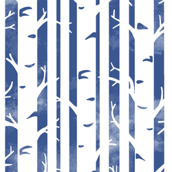 Big Birches in Blue Jay